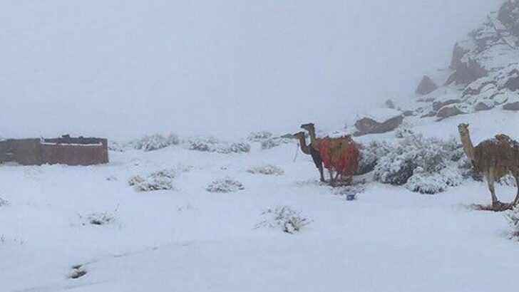 Suudi Arabistan'da kar yağdı..